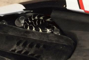 Hú vía rắn cạp nia kịch độc chui vào Yamaha Exciter