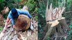 Vụ phá rừng phòng hộ A Lưới: Nhận định của trưởng ban