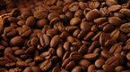 Giá cà phê hôm nay 21/9: Áp lực nguồn cung đè nặng giá
