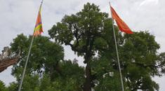 Hành trình khám phá di sản Bắc Giang: Cây Dã Hương nghìn tuổi