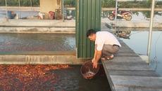 'Bể cá thần' 10 tỷ của anh nông dân Hưng Yên
