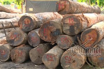 Bắt đội trưởng kiểm lâm 'ăn tiền' của trùm gỗ lậu Phượng râu