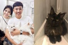 Vợ chồng Trấn Thành - Hari Won khoe thú cưng giá nghìn đô
