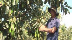 Nông dân hái trái ngọt trên đất đá, gò đồi