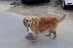 Video: Chú chó mang giúp chủ nhân 3 kg thịt về nhà