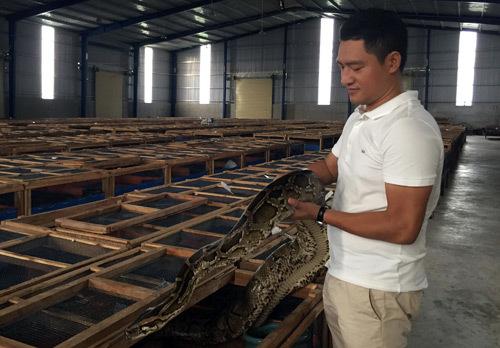 Ổ trăn 11.000 con ngay ven Sài Gòn: Mới nghe phát hãi