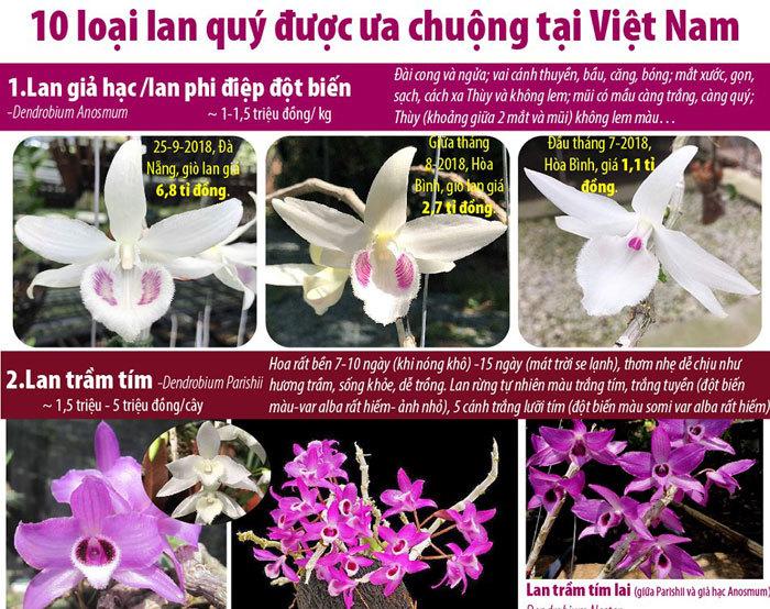 10 loại lan quý được ưa chuộng tại Việt Nam