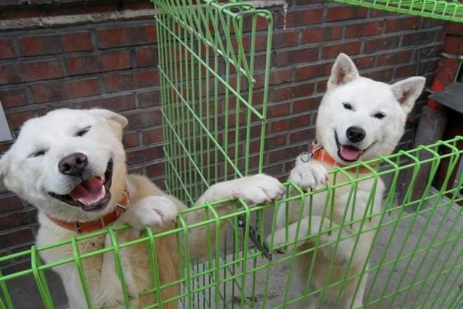 Cặp cún cưng Kim Jong Un tặng Tổng thống Hàn