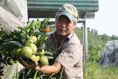 Chuyện lạ: Vườn cây chục tỷ đồng được mắc màn bảo vệ giữa rừng sâu