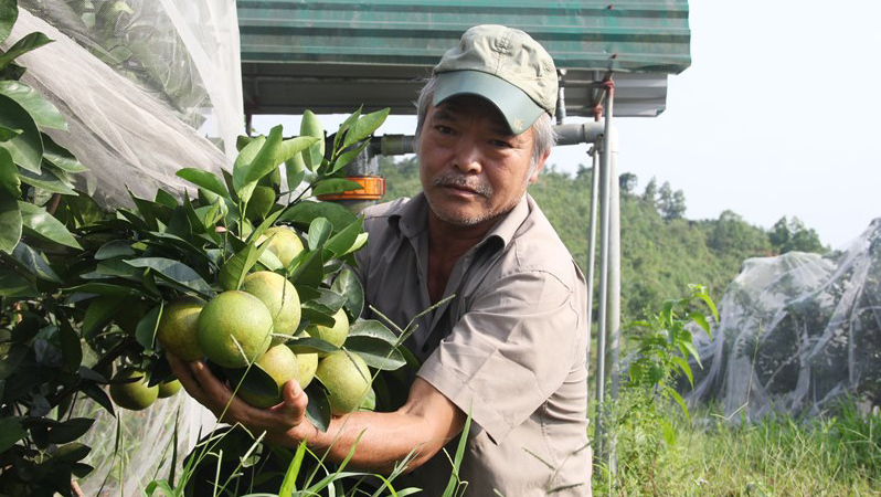 trồng cam,nông dân tỷ phú,Cam Khe Mây,vua cam Hà Tĩnh