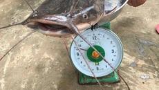 """Cần thủ kể chuyện vật lộn tóm cá trê """"khủng"""" dài 1m, nặng gần 10kg"""