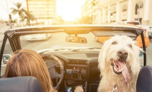 Để an toàn, tài xế cần tránh 7 hành động sau khi ngồi lên ô tô