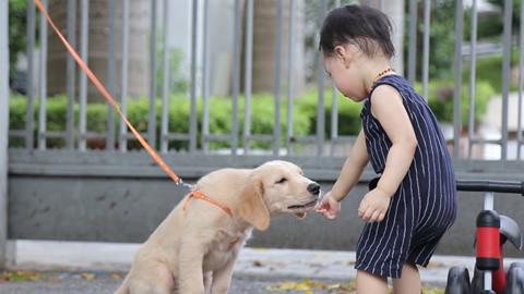 Xử phạt với hành vi không rọ mõm chó nơi công cộng