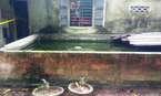 Bé gái 4 tháng tuổi chết bất thường trong hồ nước