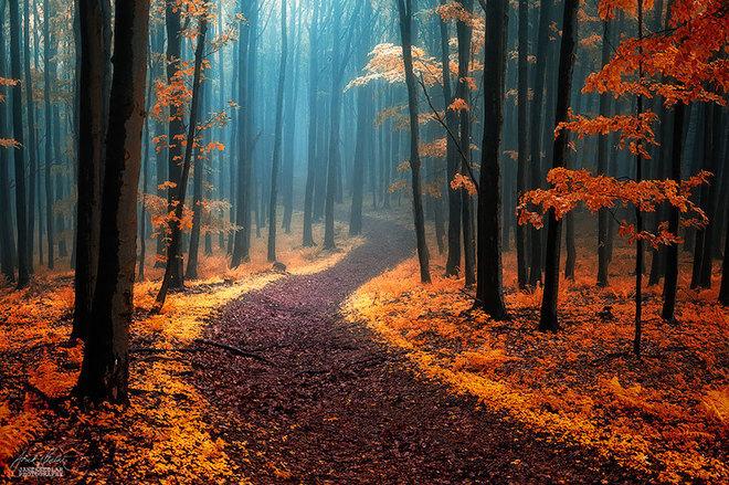 Mơ,mơ về con đường,con đường xưa,tuổi trẻ,tình yêu