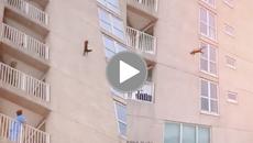 Ai mà ngờ được: Trên đời có loài vật rơi từ độ cao 7 toà nhà mà vẫn tỉnh bơ không chết
