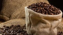 Giá cà phê hôm nay 15/11: Áp lực của mùa vụ