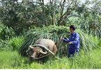Mỗi năm đều đặn chia nhau 1.200 tỷ: Chuyện lạ xứ đồng xanh số 1 Việt Nam
