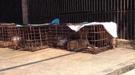 Biến động lớn ở làng giết chó lớn nhất nhì Bắc Bộ