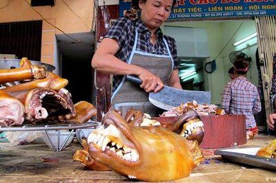 Báo Đức viết về 'văn hóa ăn thịt chó' ở Việt Nam