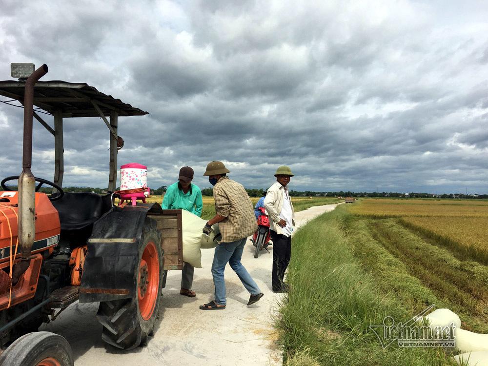 Hồi sinh cánh đồng 'chết': Cuộc vận động suốt 2 tháng ròng