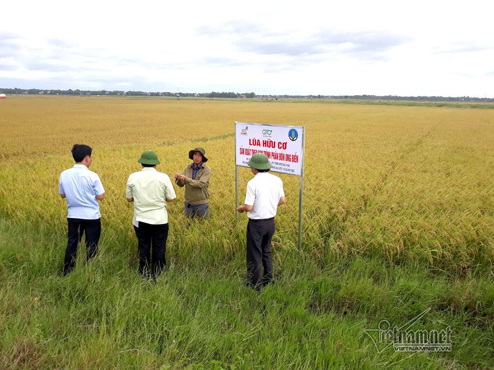 Hồi sinh không ngờ những cánh đồng 'chết' ở Quảng Trị