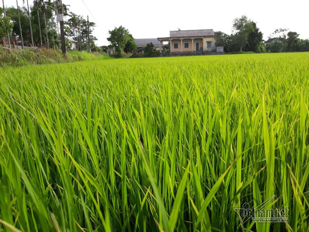 nông nghiệp hữu cơ,nông nghiệp sạch,Quảng Trị
