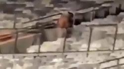Cặp đôi thản nhiên làm 'chuyện ấy' trên sân vận động