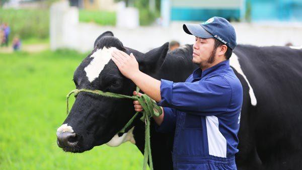 Rộn ràng chờ Hội thi Hoa hậu bò sữa lần thứ 15