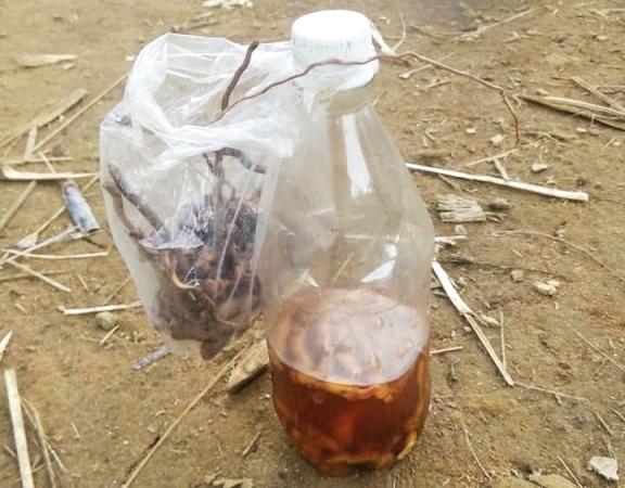 Chai rượu khiến hai cậu cháu tử vong ở Quảng Nam: Có độc tố từ cây lá ngón