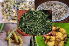 Sởn da gà 5 đặc sản từ sâu nhung nhúc, béo núc kinh dị ở Việt Nam