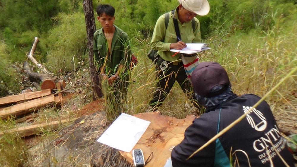Cưa gỗ quý vườn quốc gia, 15 thanh niên bị truy tố