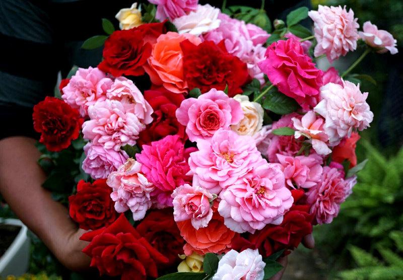 thị trường 20/10,hoa hồng tăng giá,ngày Phụ nữ Việt Nam