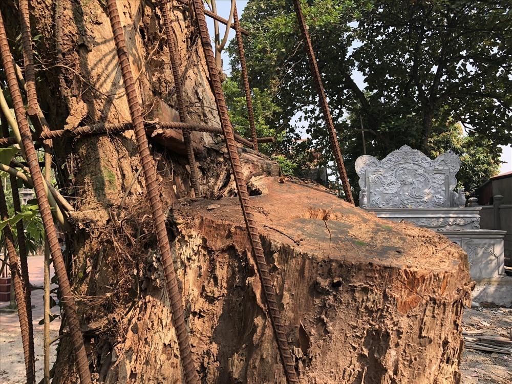 Tiết lộ 2 phương án xử lý số tiền 'khủng' từ đấu giá gỗ sưa trăm tỷ