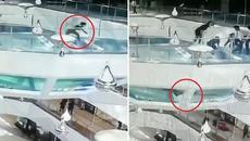 Cô gái sống sót diệu kỳ khi rơi xuống bể chứa 'sát thủ đại dương'