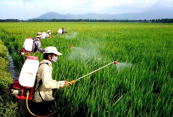 """Người nông dân """"nghiện"""" sử dụng thuốc bảo vệ thực vật"""
