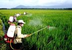 Thói quen dân Việt: Dính tới hàng Tàu, mang tiếng toàn cầu