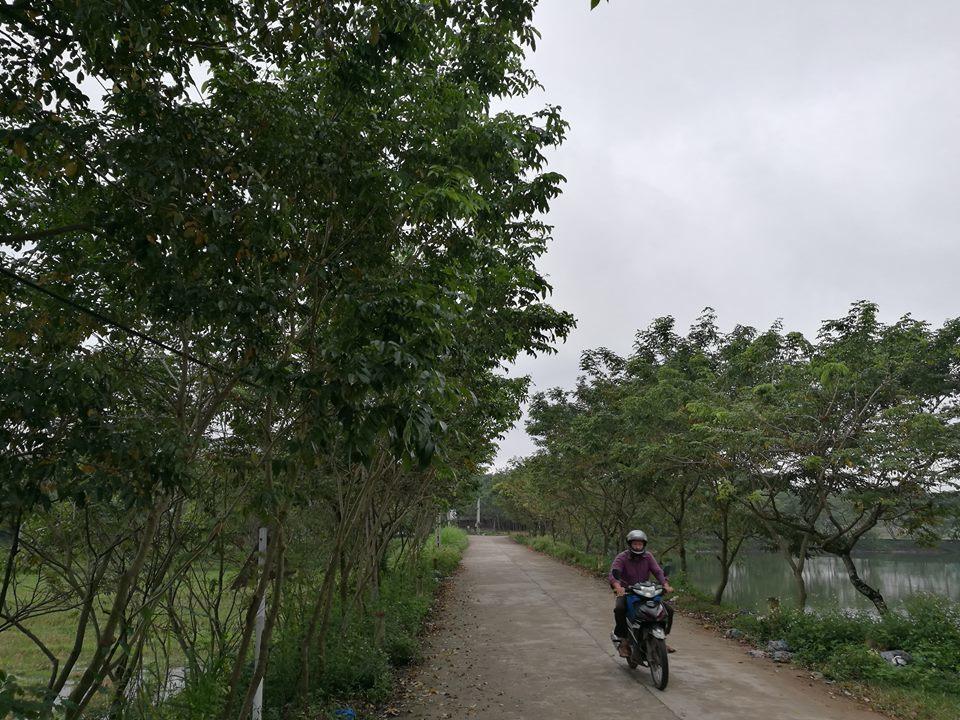 Thủ phủ sưa đỏ: Cả làng xây biệt thự, đua nhau sắm ô tô Lang-sua-do-2