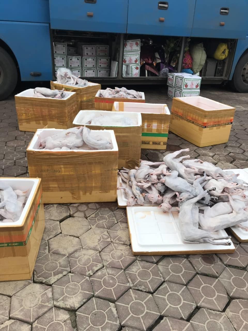 1 tấn thịt 'tiểu hổ' thối vi vu ra Thái Bình suýt vào nhà hàng