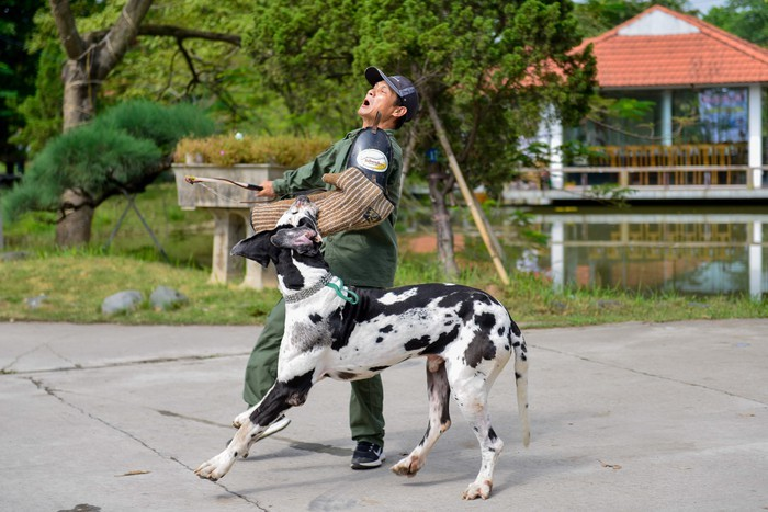 nuôi chó,chó,chó quý tộc