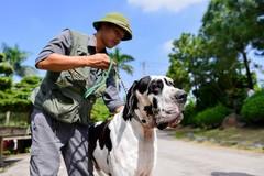 Loài chó hung dữ nặng hơn 100 kg xuất hiện ở Việt Nam giá gần 500 triệu