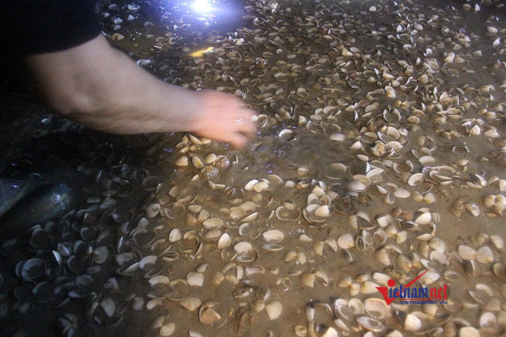 Hàng trăm tấn ngao chết há mồm trắng bãi ở Quảng Ninh