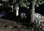 Nam thanh niên chết bí ẩn dưới gốc cây ở Sài Gòn