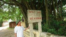 Ly kỳ cuộc chiến bảo vệ gốc cây trăm tỷ báu vật của làng