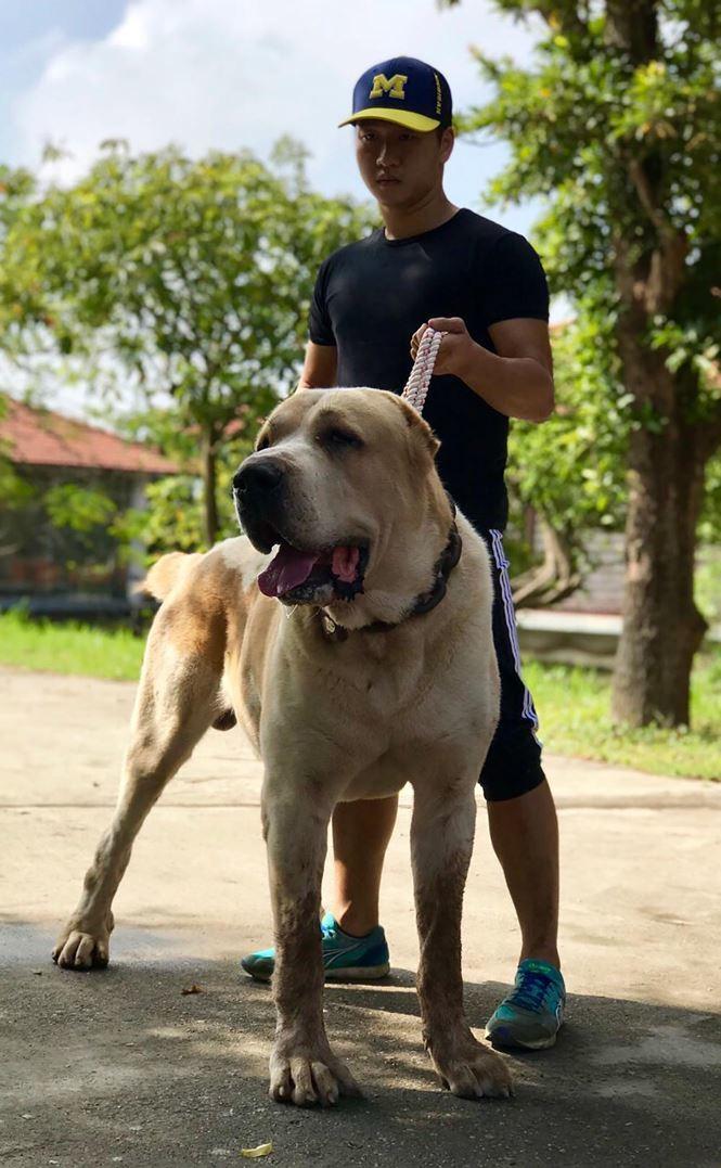 nuôi chó,thú cưng,chó cảnh,chó