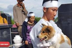 Cái chết uất hận của chú chó đang để tang bà thi bị cẩu tặc bắt