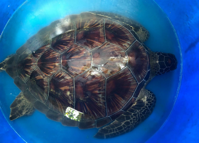 động vật quý hiếm,rùa biển,Sài Gòn