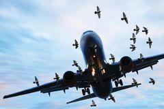 Sát thủ đáng sợ của Không lực Mỹ