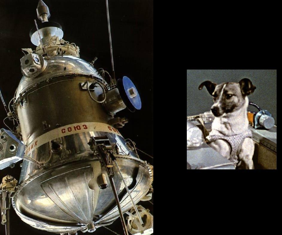 Ngày này năm xưa: Câu chuyện về chú chó bay vào vũ trụ