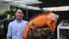 Kinh hãi: Ổ rồng Nam Mỹ ở Sài Gòn, khoanh lưới 2.000 con rắn tại Hậu Giang